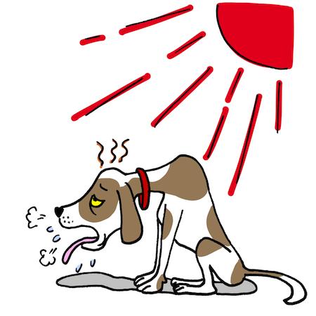 熱中症 犬 20160909
