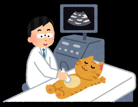 猫 エコー検査 20180531