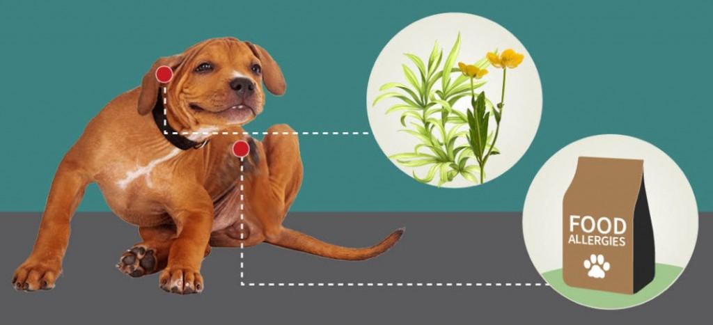 犬 食事性アレルギー 皮膚炎 2019-02-09